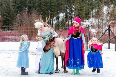 Frozen reindeer.jpg