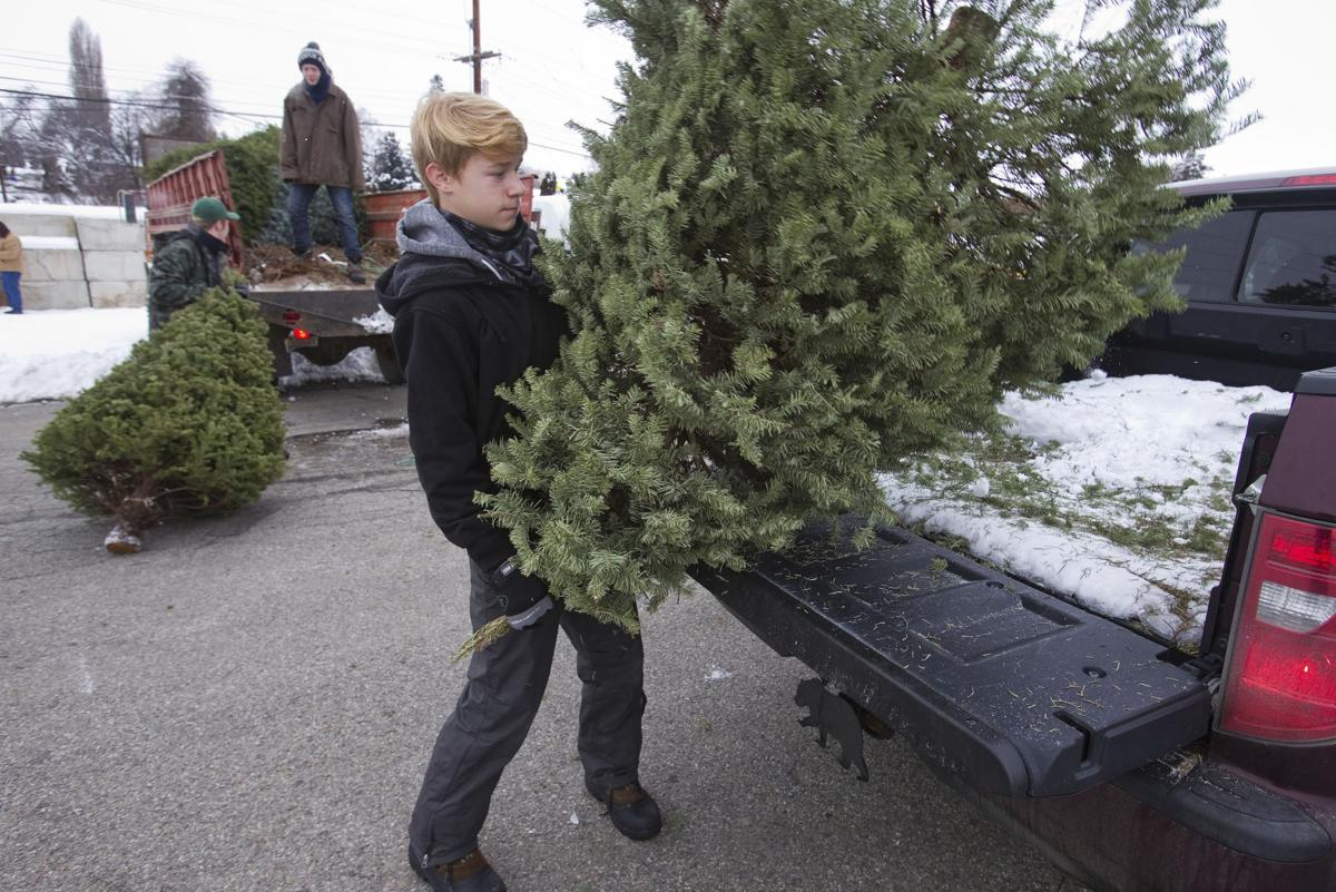 Looking for a place to recycle your Christmas tree? | Local News