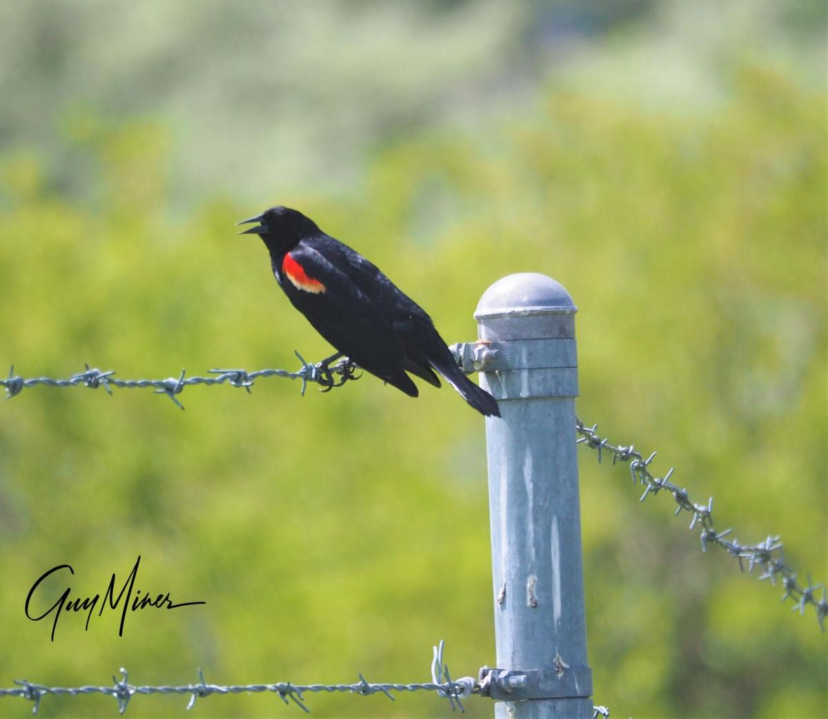 guy_miner_bird.JPG
