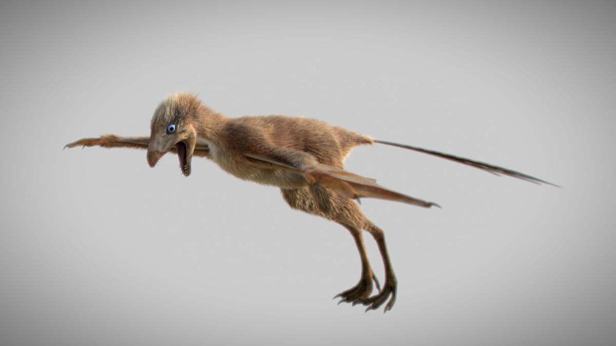 A Jurassic Period dinosaur Ambopteryx longibrachium in a 3-D reconstruction