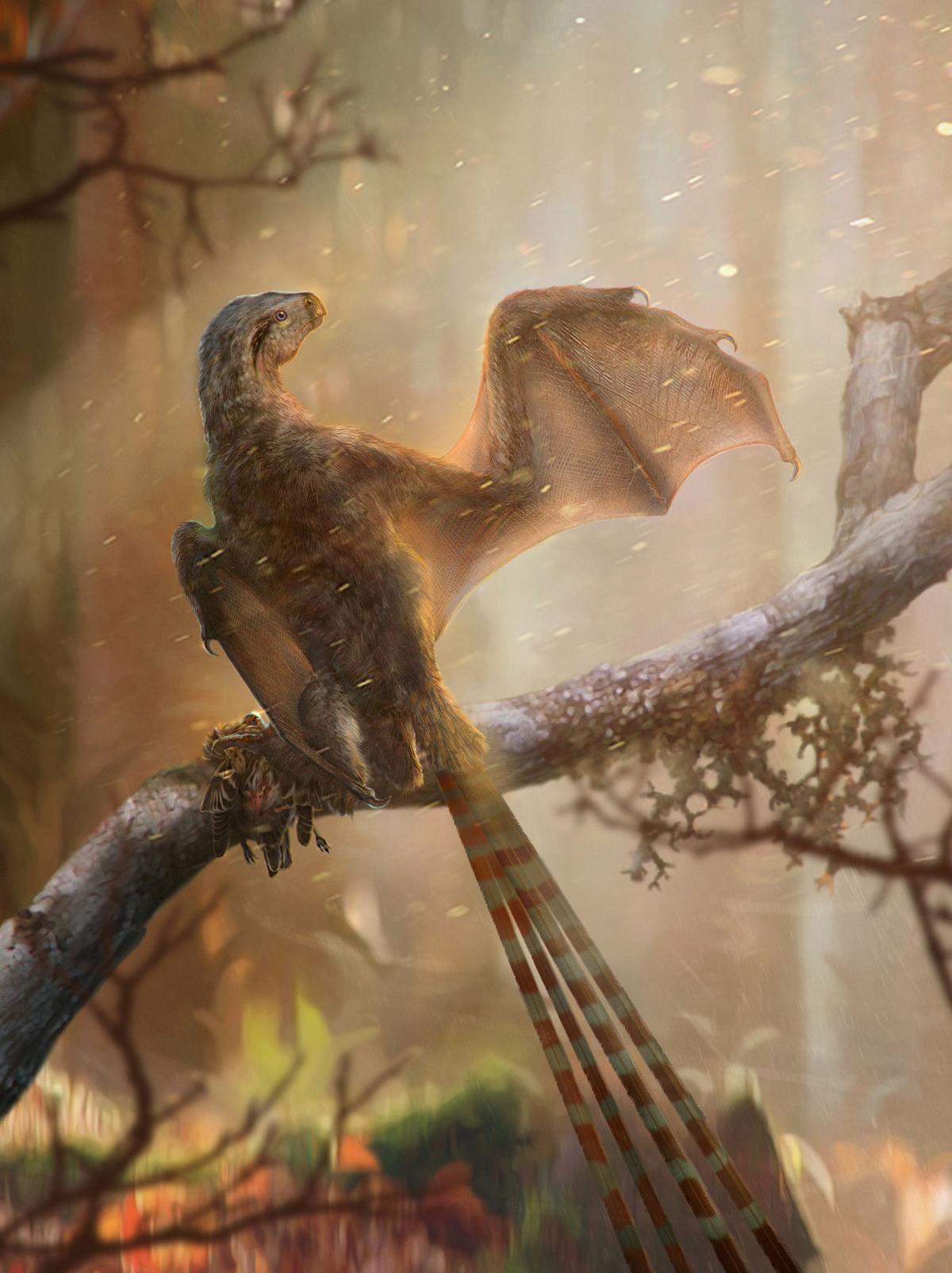 A life reconstruction of a Jurassic Period dinosaur Ambopteryx longibrachium
