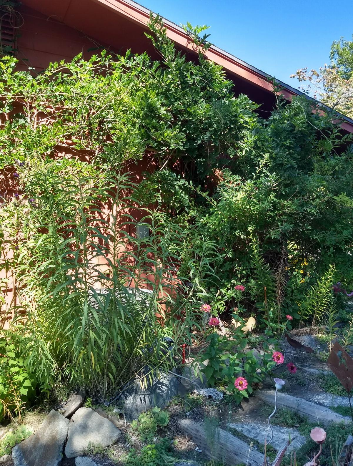 Tips for renewing your landscape