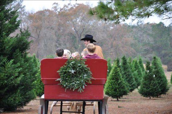 fall harvest festival set saturday at grant christmas tree farm westcentralsbestcom - Christmas Tree Farm Louisiana