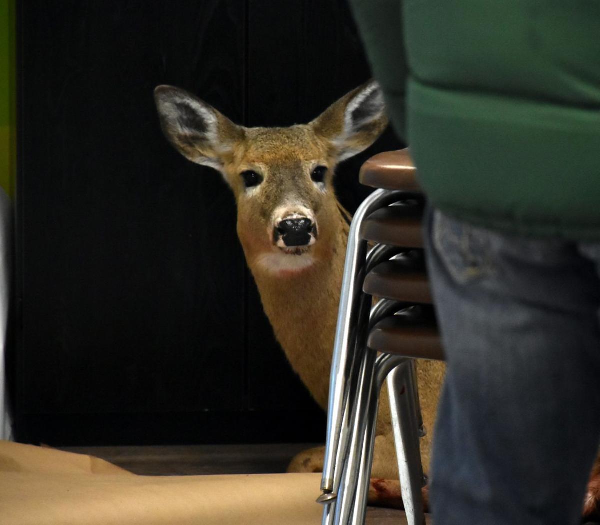 Deer rescue (Photo 4)