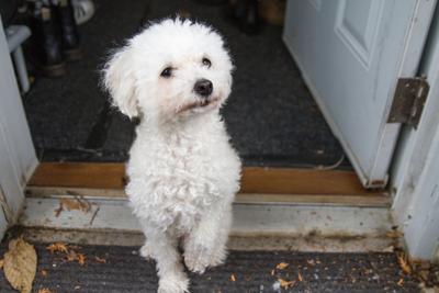 Pets in rentals - Kristin Lee (1 of 3).jpg
