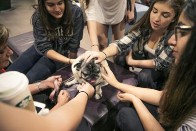 Therapy dog rehab (Photo)