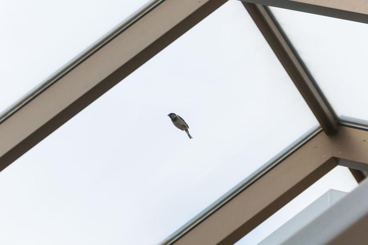 UCC Bird Photo 2