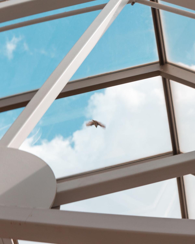 UCC Bird 2