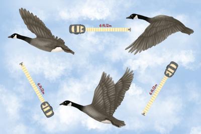 SPOOF: Geese flying 6 feet apart (graphic - jpg)