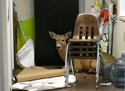 Deer rescue (Photo 1)