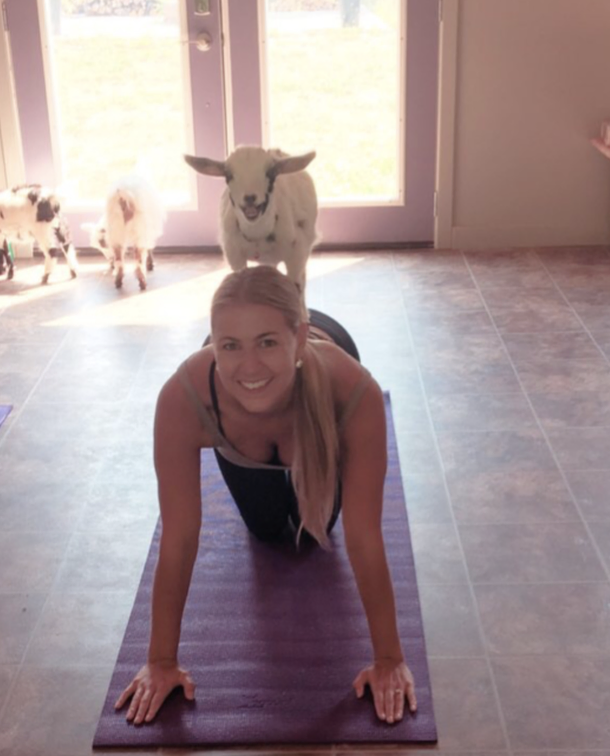 Palentine's Goat Yoga Photo