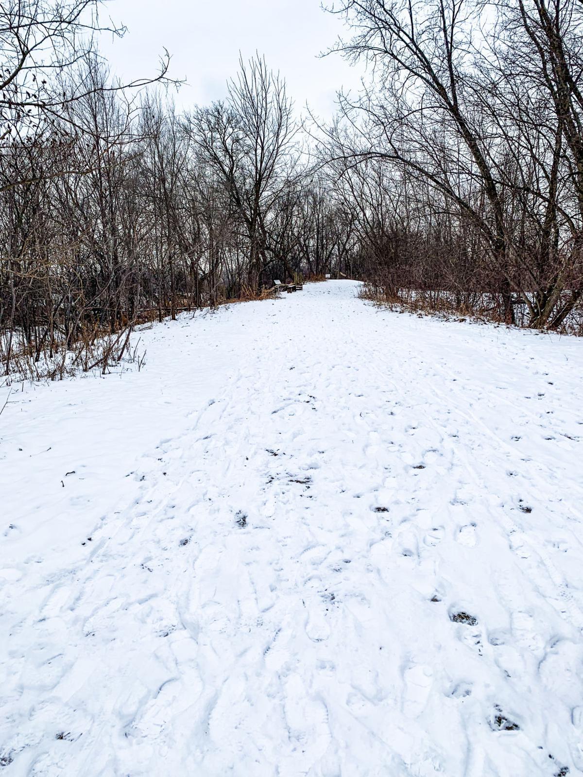 Nature Walk Series (4 of 4)