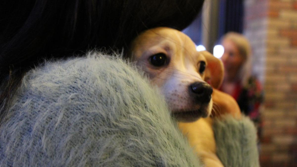 Puppy Love: Kalamazoo Beer Exchange hosts puppies available for adoption
