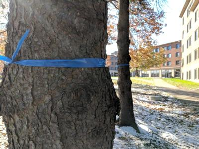 Trees marked for removal