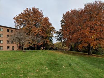 Trees by the Burnhams