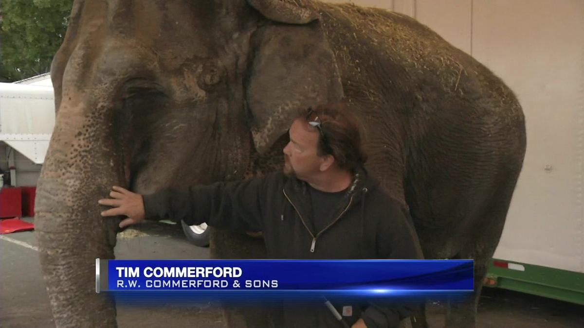 Call to end wild animal acts at the Big E after viral Facebook post.