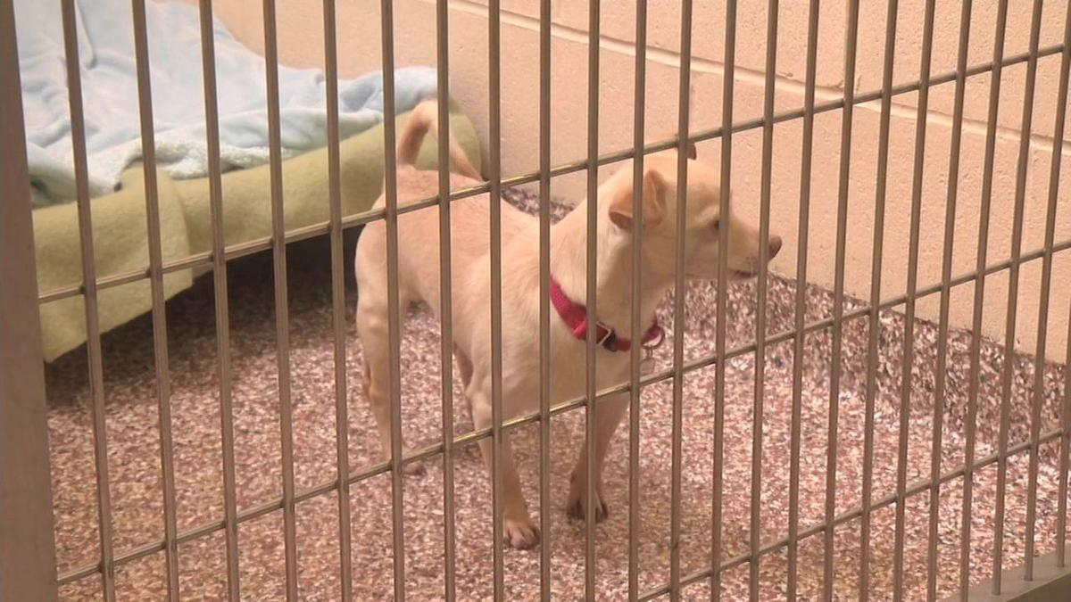 Dogs relocated from Hurricane Florence looking for forever homes