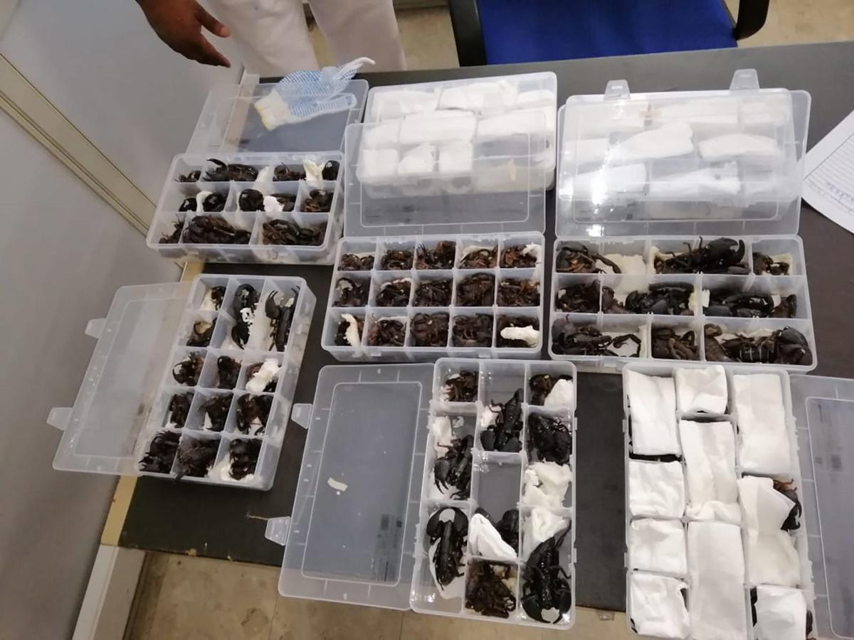 A Chinese traveler was caught trying to smuggle 200 live scorpions out of Sri Lanka