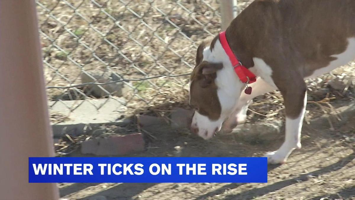 Reports of winter ticks on the rise