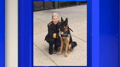 Springfield Police looking into alleged incident involving K9 Mango.