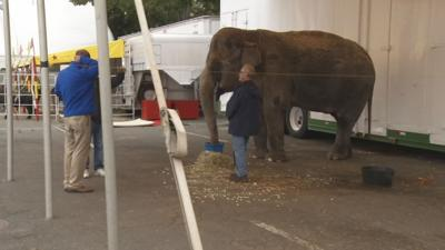 Organizers eliminating elephant rides from the Big E.