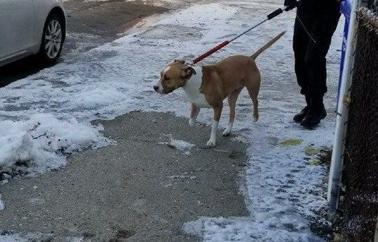 City of Springfield takes action after dog prevents residents from receiving mail