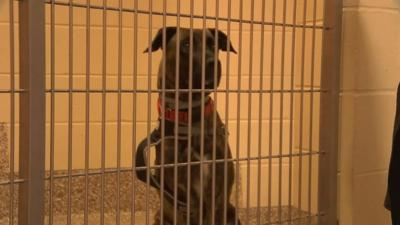 Local family calls attention to legality of dog leasing in Massachusetts.