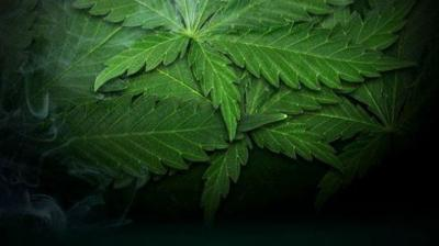 Recreational marijuana shop in Amherst to open this Sunday.