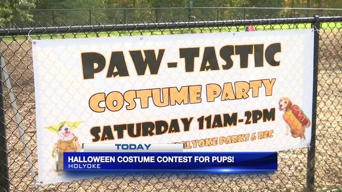 Halloween costume contest for pups held in Holyoke
