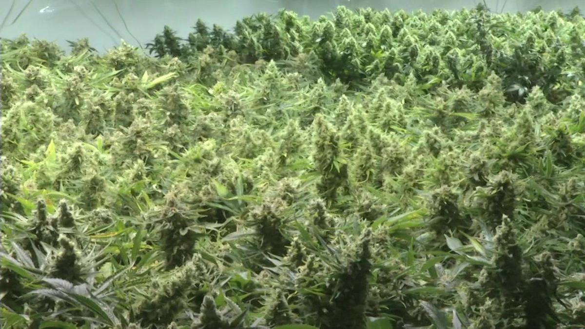 Springfield Planning Board gives recommendations on retail pot sales.
