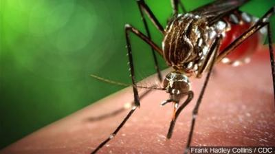 State plans aerial mosquito spraying in two Mass. counties