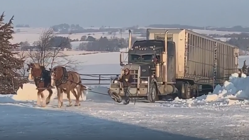 WATCH: Two horses pull semi truck up icy driveway