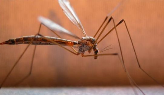 CDC issues new warning for bugs this year