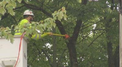 Eversource tree trimming 100218
