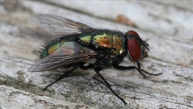 How to keep your home free from flies