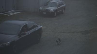 Video shows individual abandoning dog at West Springfield business.