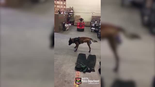 Police dog can't quite get used to his new winter boots