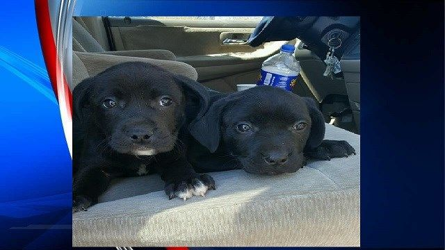 Investigation into sale of sick puppies ongoing in West Springfield
