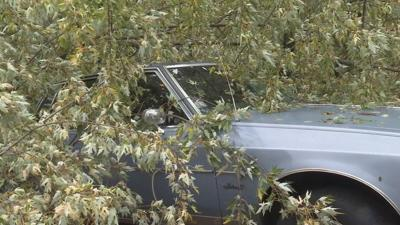 Fallen tree damages Springfield man's classic car