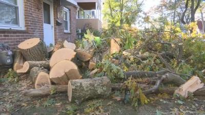 Springfield parents act fast to save children before tree topples over onto home.