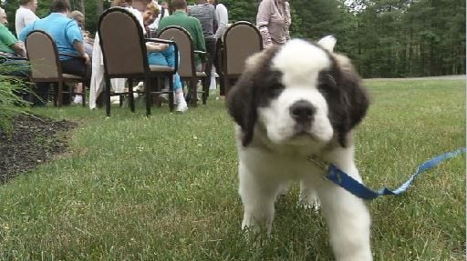 Greenfield Police unveil new comfort dog