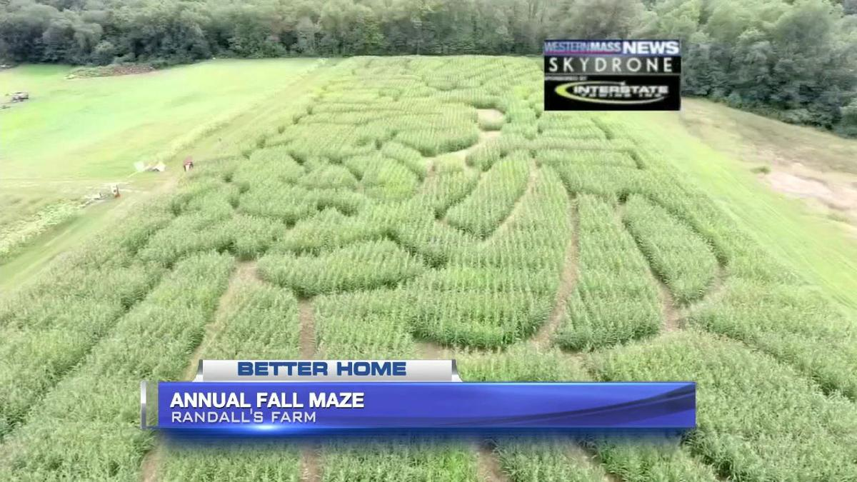 Take a trip through the maze at Randall's Farm in Ludlow