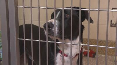 'Dixie dogs' arrive at Dakin Humane Society