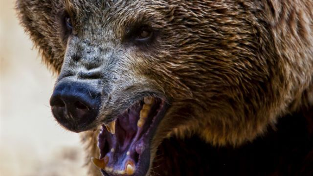 Wyoming hunting guide killed during bear attack