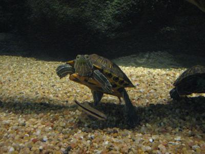 Aquarium gives visitors chance to 'walk among the fish'