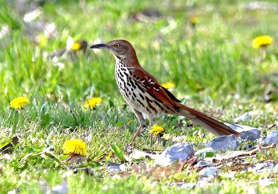 Aerial View Redux: Birding in April
