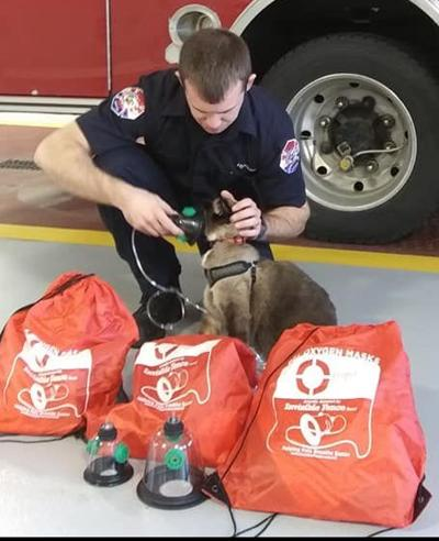 Pet masks could save lives in North Ridgeville