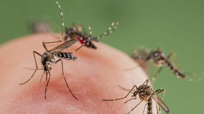 Early-season mosquitoes abundant on West Side