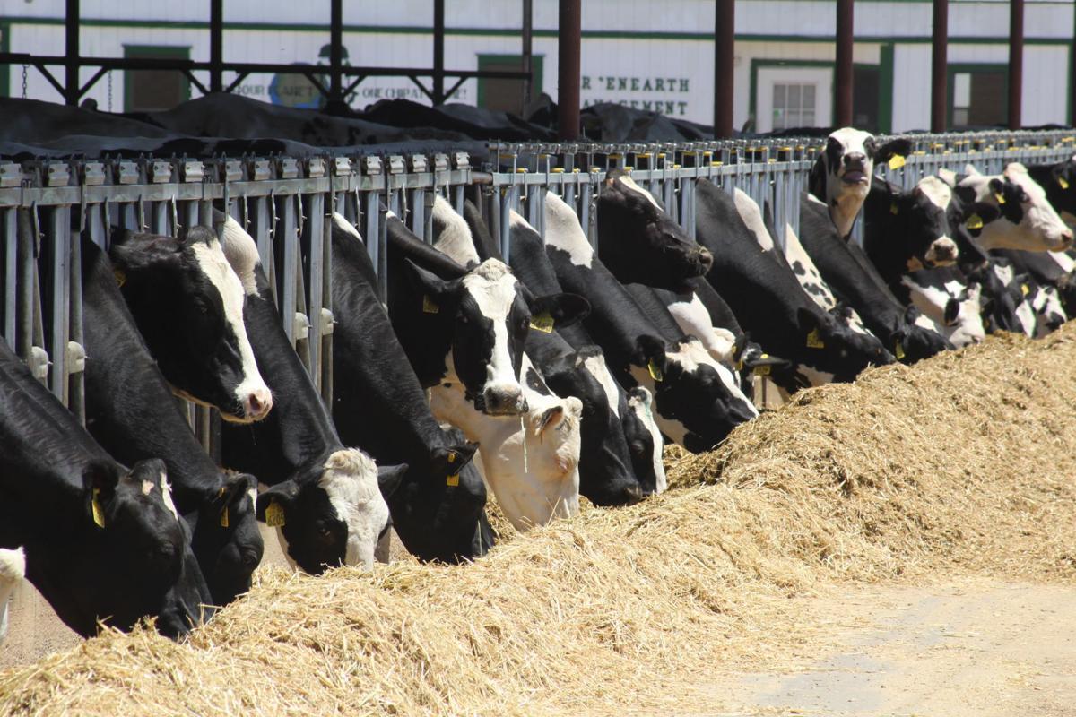 dairy 1.JPG