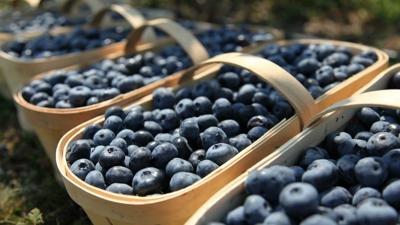 Things to do: Bethlehem's Blueberry Festival debuts to-go market